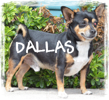 READ DALLAS'S STORY